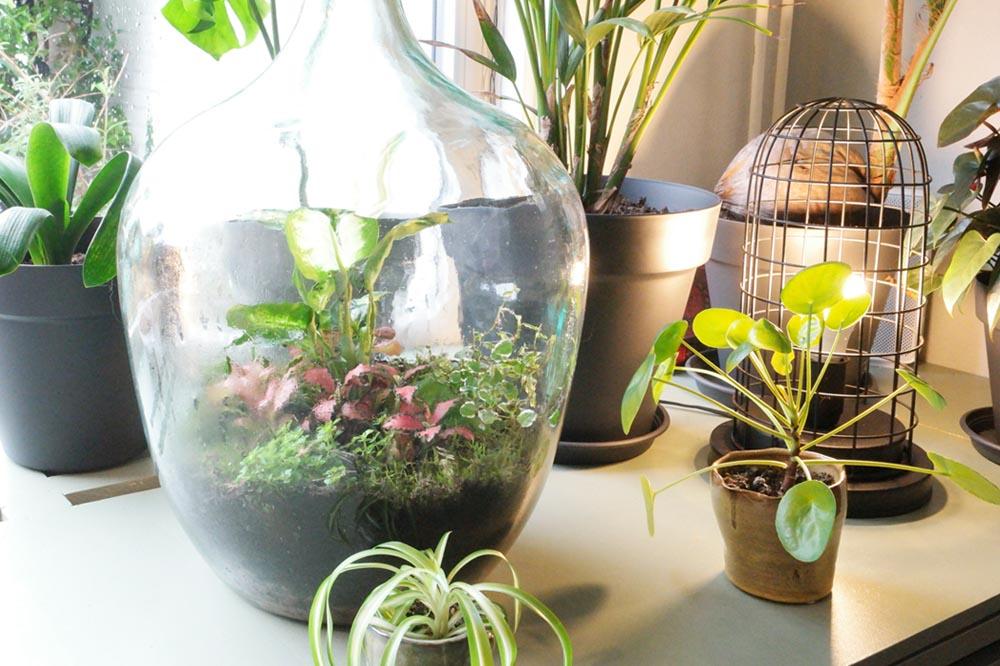 Ecosysteem plant